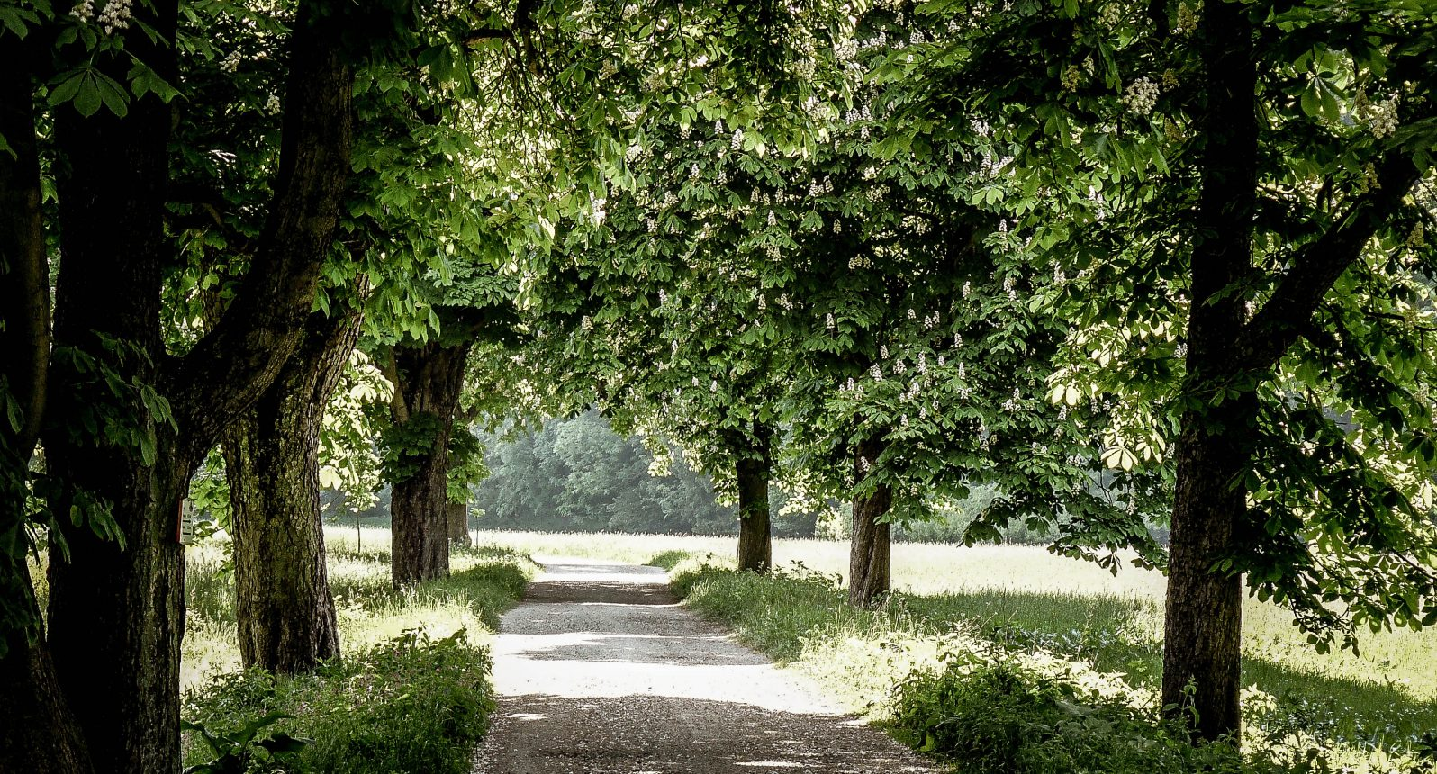 Kastanienallee im wunderschönen Selketal