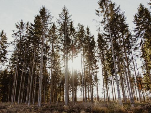 Ballenstedter Forst